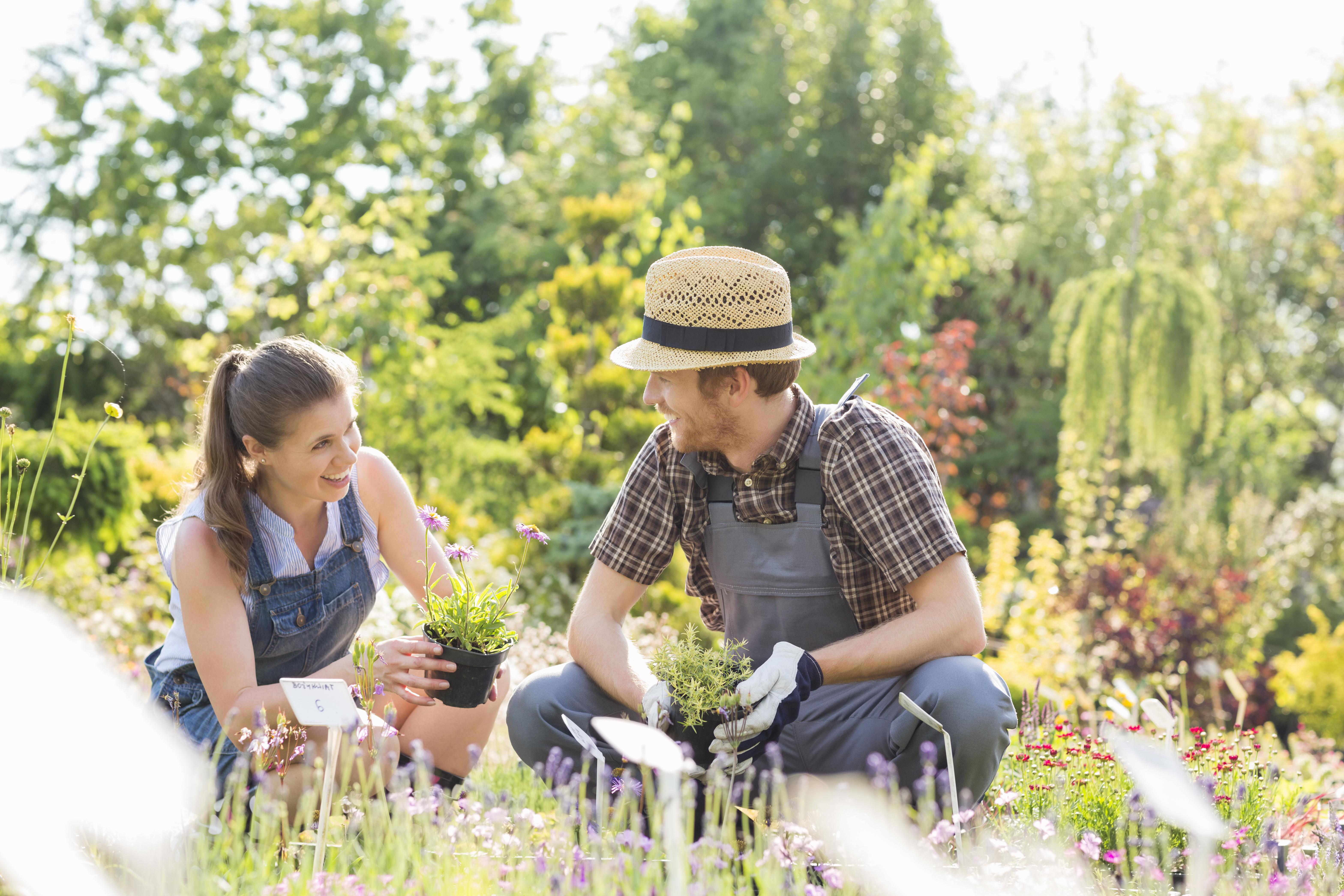 Gardeners talking while gardening at plant nursery