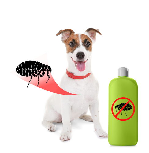 Protect Your Pets From Pesky Fleas